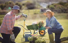 Smiling senior couple holding plant sapling while gardening