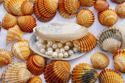 Various seashells