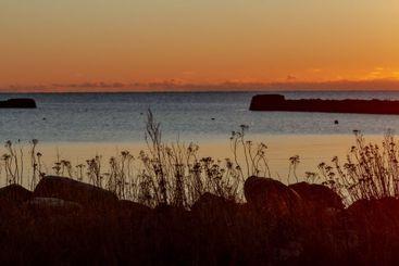 Pirerna i Galtabäcks Hamn i solnedgång - Silvertid
