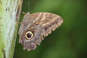 nice butterfly close up