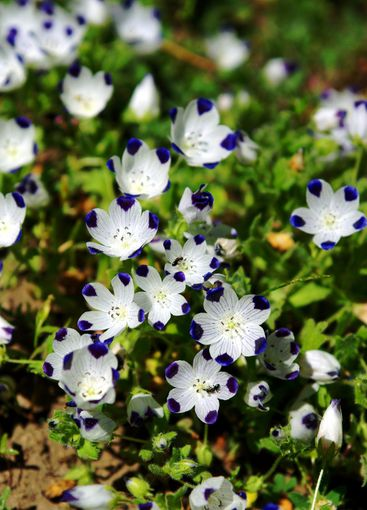 Tiny Blue And White Wildflowers