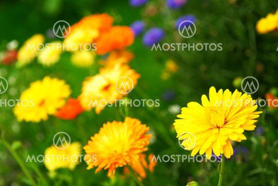 Kukka tausta