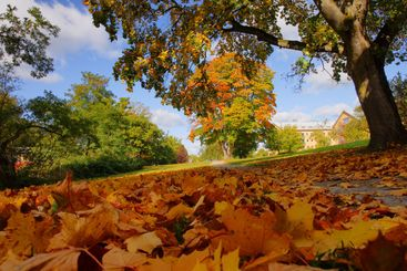 Frog's view of autumn
