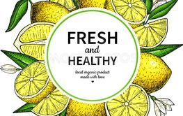 Lemon frame vector drawing. Citrus fruit circle label...