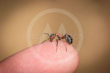 ant bites the finger