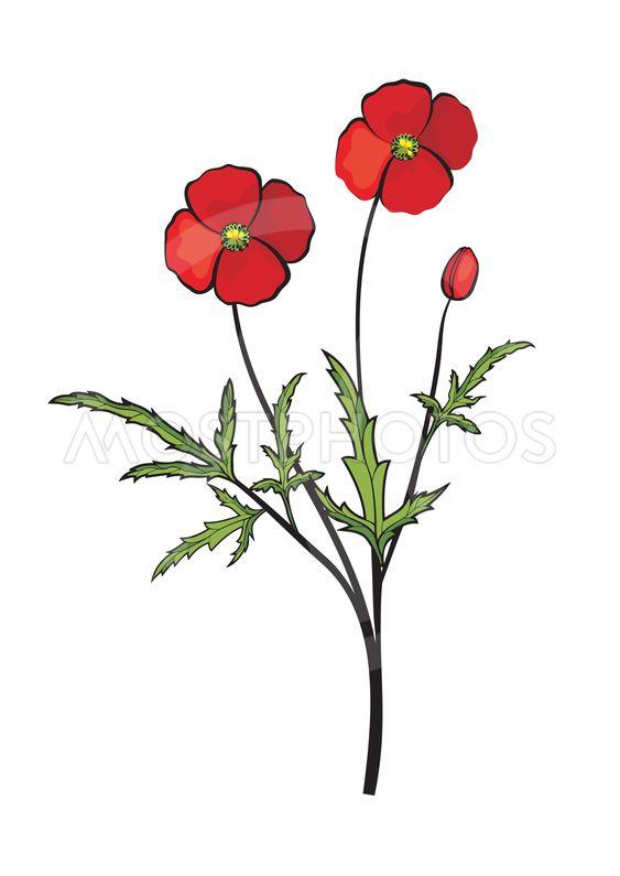 Vector illustration med röd blomma, vallmo.