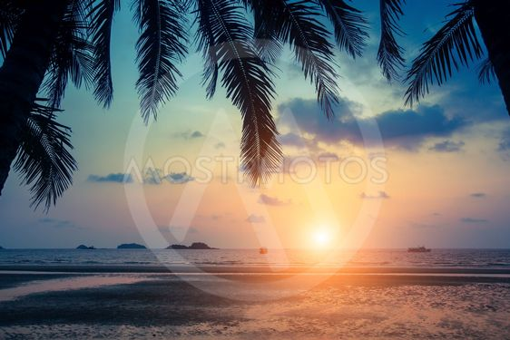 Tropical sea beach through palm leaves during amazing...