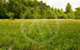 Orkidemosse på Öland vid Jordtorpsåsens naturreservat