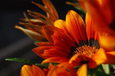 A orange-red flower