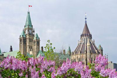 Parliamentary Lilacs
