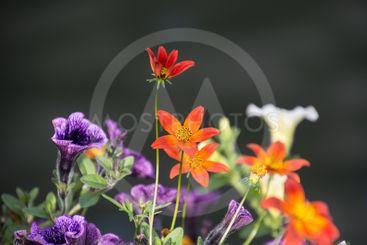 olika blommor närbild