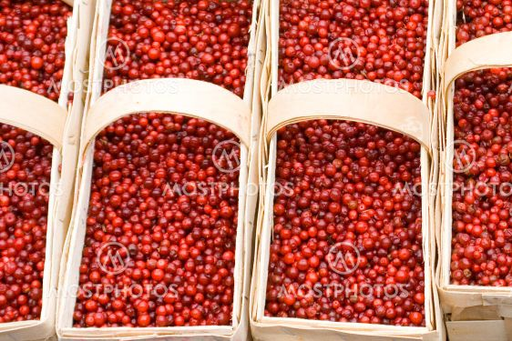 lingonberries00