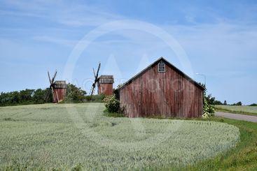 Väderkvarnar och lada i ett odlingslandskap på Öland