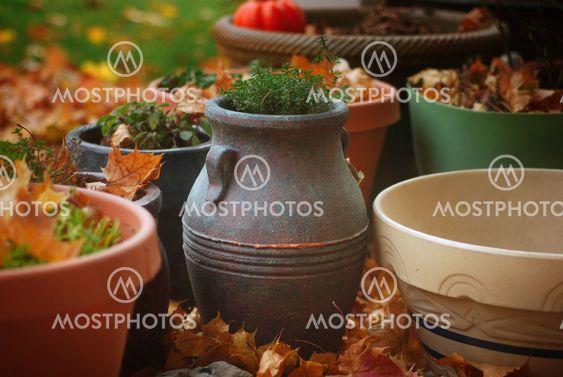 Thyme Pot