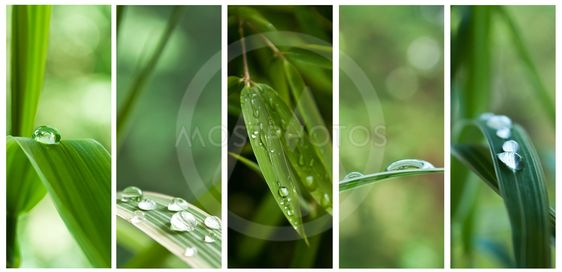 raindrops on bamboo