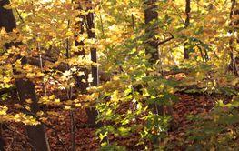 Fallen tree leaves