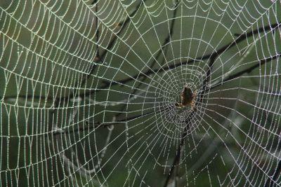 Кружева  паука.