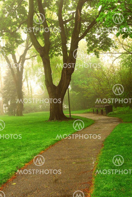 Dimmigt park