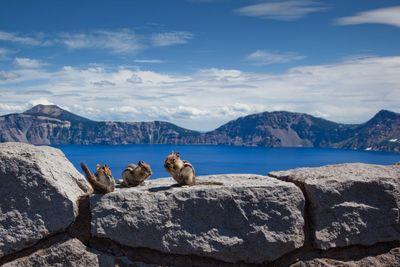 Chipmunk picnic at the lake