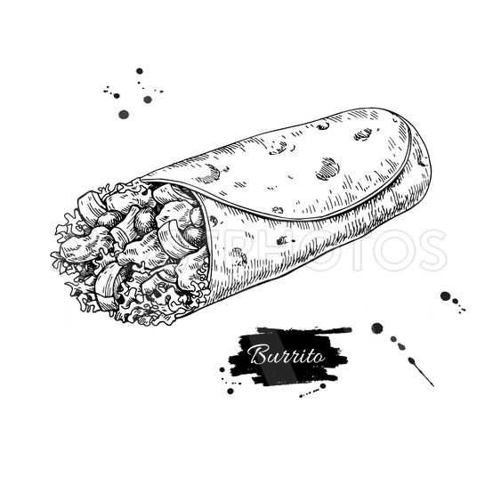 Burrito drawing. Traditional mexican food vector...
