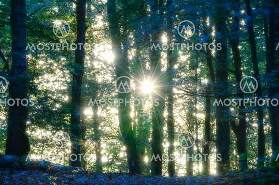 Sunlight through trees in forest, Rådasjön Naturreservat,
