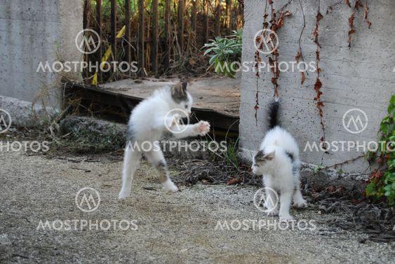 Pelaaminen kissat