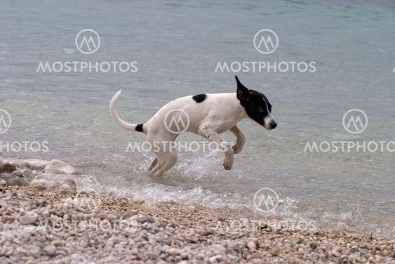 Hund på badplats