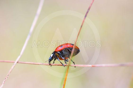 Ladybug on a straw