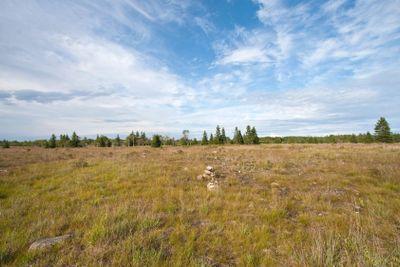 Alvar Grassland and Stones