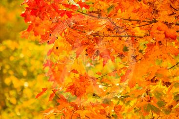 autumn leaves fall trees nature background