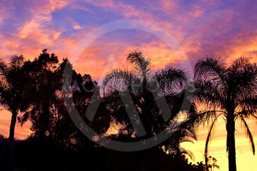 Tropical Sunrise Silhouette.