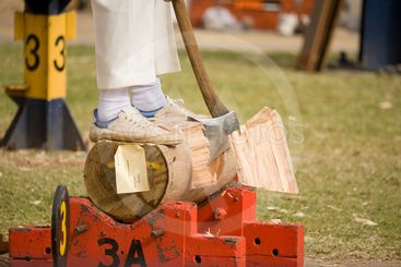 Woodcutting Competition