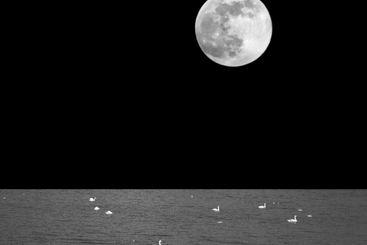 Big, bright full moon shining in the dark night