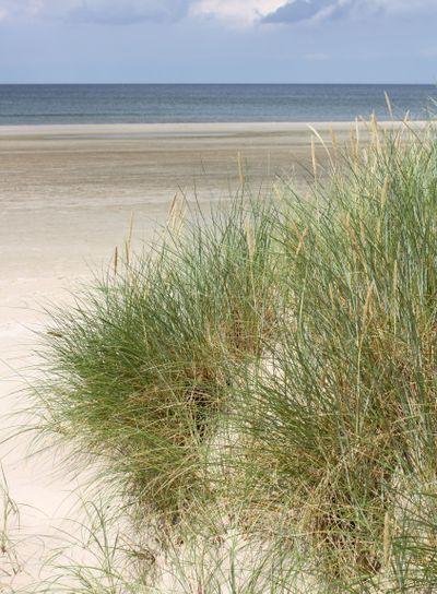Denmark beach dune grass