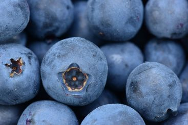Blueberry Berries Juicy Ripe Large Fruits Delicious...