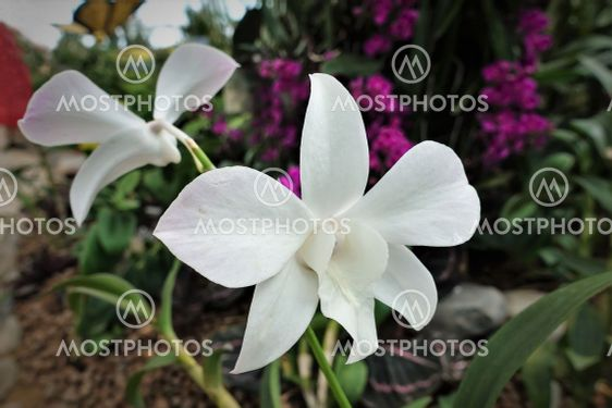 Graceful flower of a white orchid.