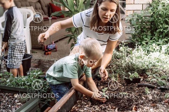 Mother and her sons plant a plant in the garden. Little...