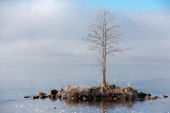 Trädet på ön