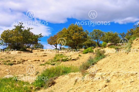 Holm oak trees in Spain, typical landscape