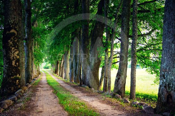 Road through a forest, summer landscape