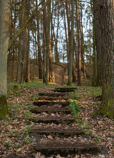Stone steps in the woods (forest) or park