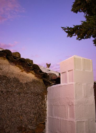 Cat on a stone wall in a field in Andalusia with a...