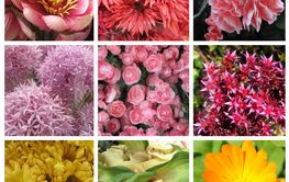 Nine images of flowers