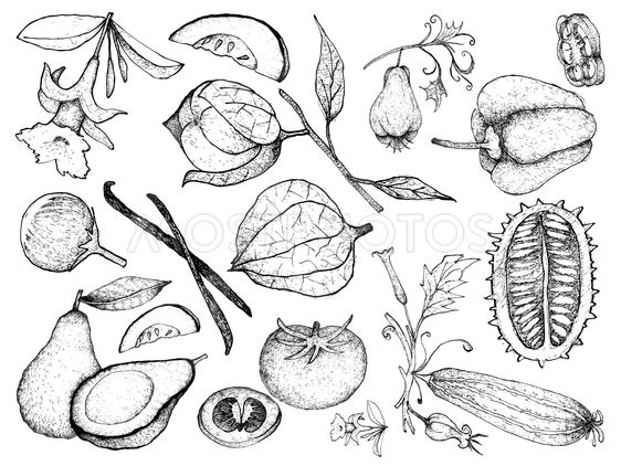 Hand Drawn of Gourd and Squash Fruits