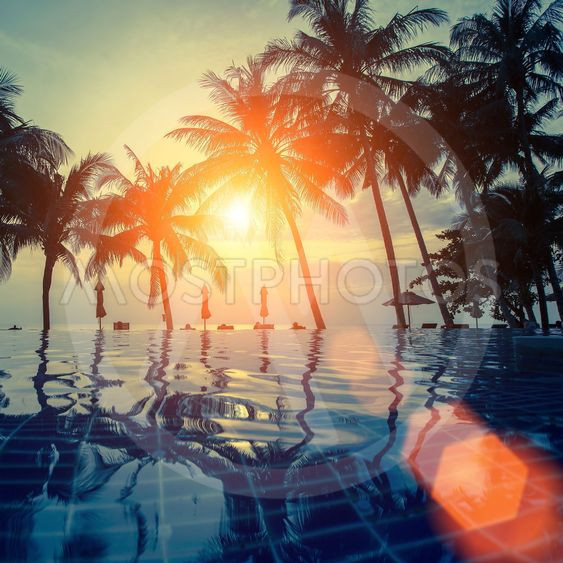 Silhouette of palm trees and the reflection in the pool...