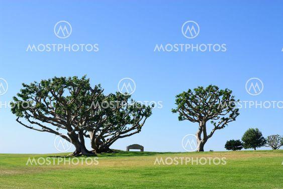 Puut ja penkin