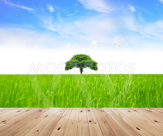 green grass and tree.