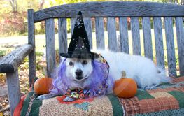 Witchy Pup