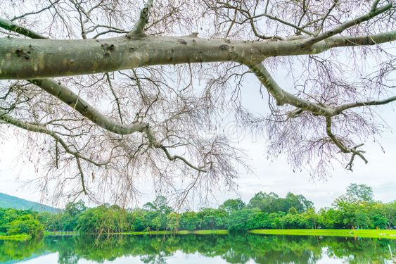 Beautiful green park with lake , Ang Kaew at Chiang Mai...