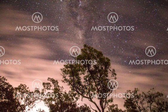 A palm tree under a starry sky
